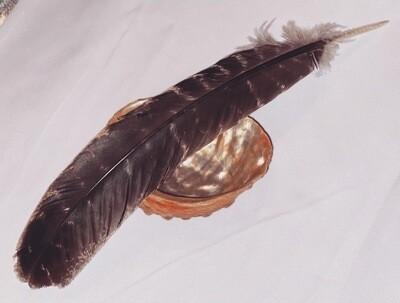Abalone Shell & Turkey Feather Bundle