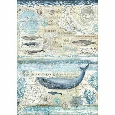 Stamperia A3 Rice Paper Sheet - History of the Whale (Arctic Antarctic)
