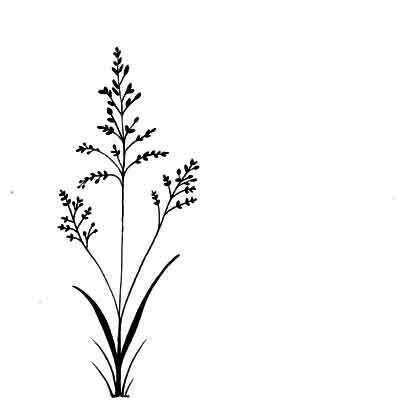 Lavinia Stamps - Field Grass