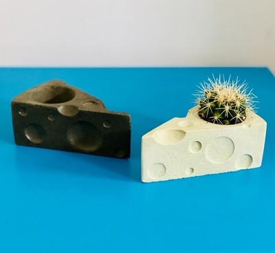 Small cheese succulent pot