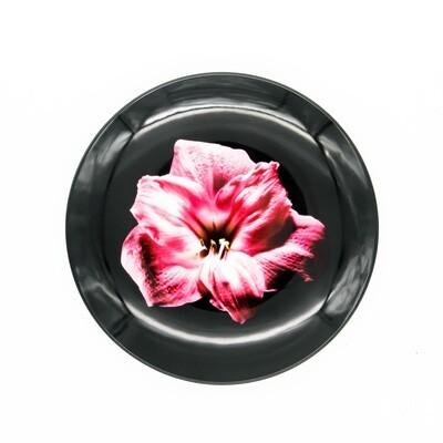 Pink Amaryllis Plate