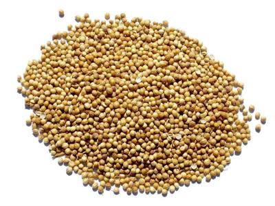 Coriander Seed - Whole