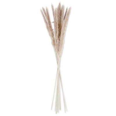 Tan Pampas Grass Bundle