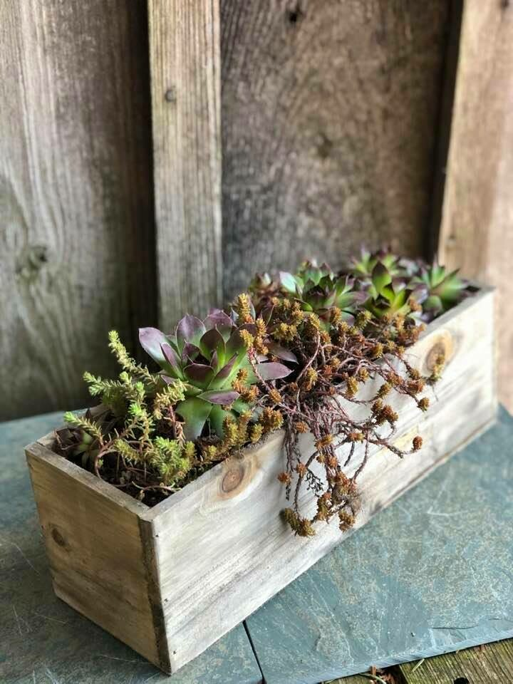 4-20 Community Helper Gift of the Week: Succulent Planter! SOLD OUT!
