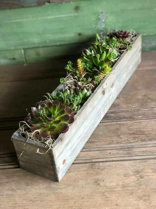 Hardy succulent planter - 18 inch