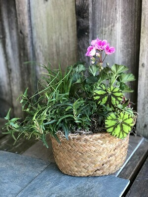 Mixed Houseplant Planter