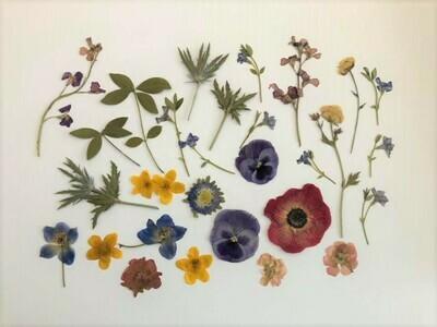 Pressed Flower Kit: Summer Brights