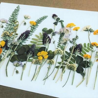 Pressed Flower Kit: Woodland Wildflowers