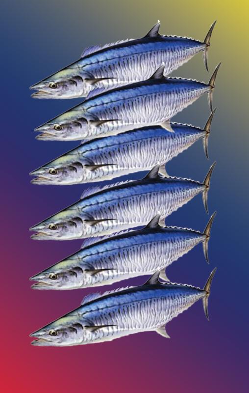 Spanish Mackerel Quota
