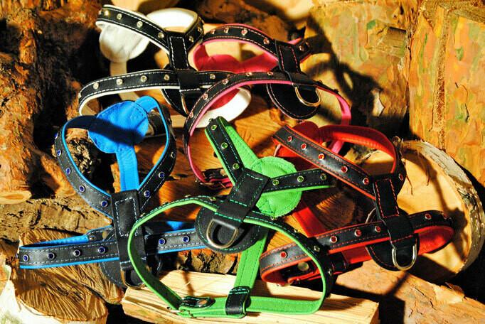 Y- Ledergeschirr mit Strassnieten