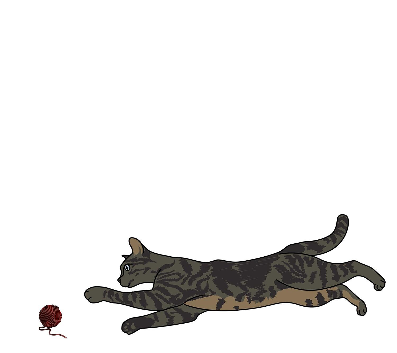 Geboortekaartje Kat bol wol (3331)