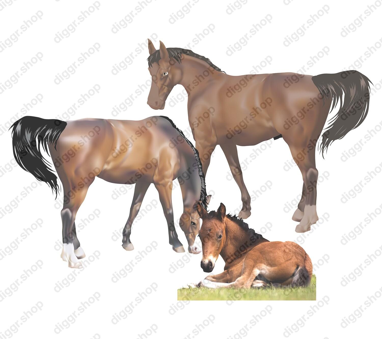 Geboortekaartje Paarden (403)
