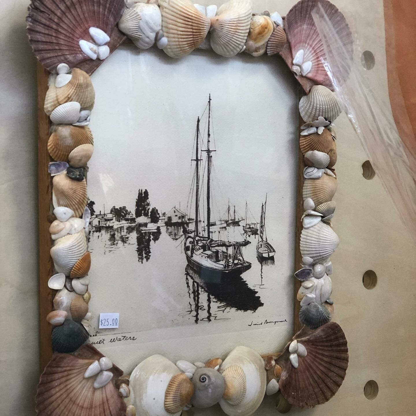 Sea Shell Framed Art