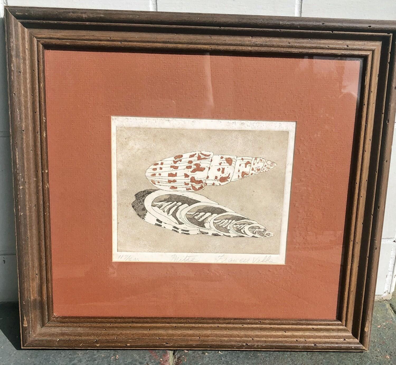 Framed Shell Print