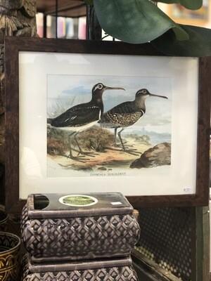 Framed Shore Birds