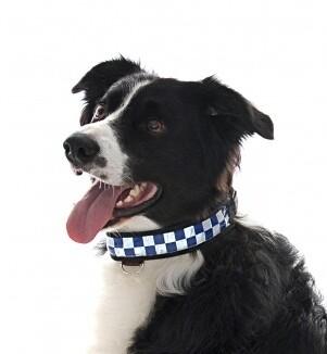 Reflecterende hondenhalsband met LED licht