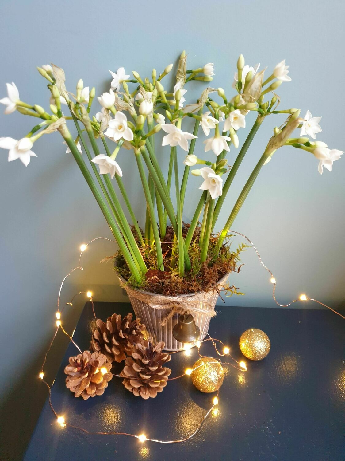 Scented narcissi planter
