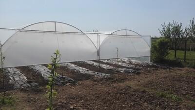 TOP PROFI »Erdbeere« Gewächshaus - für professionelle Pflanzenproduktion  -  Erdbeeren und Gemüse