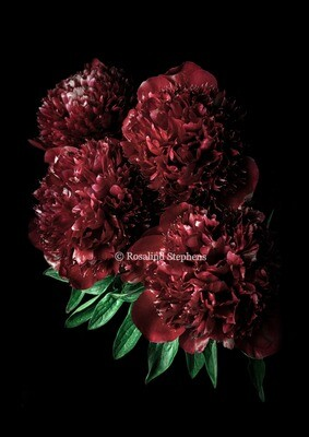 Red Peonies (A3) In Support of Black Lives Matter Movement