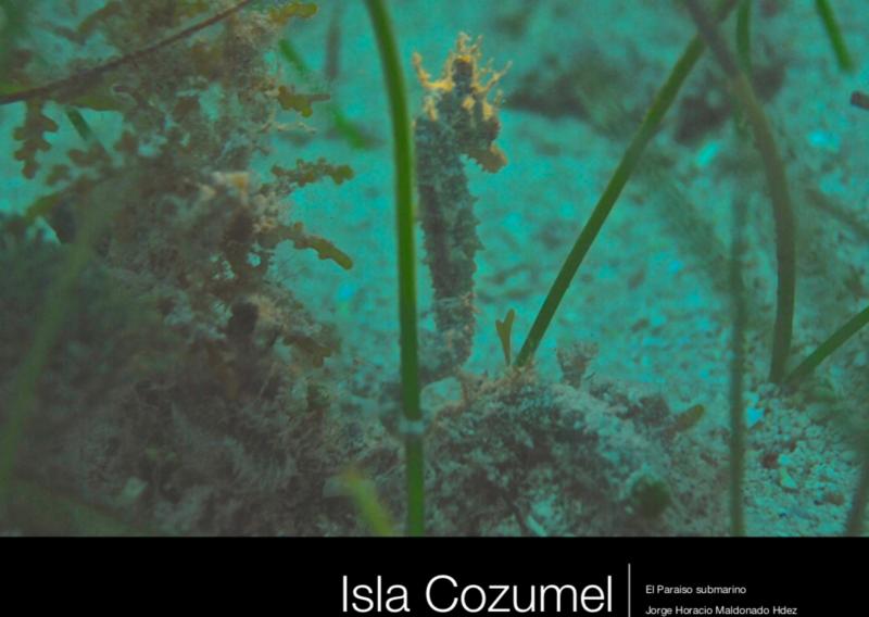 Book of Cozumel underwater nature