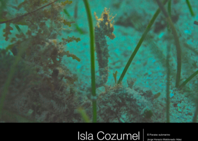 Book of Cozumel underwater nature