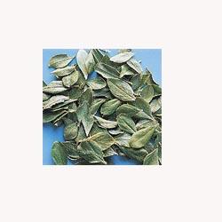 Buchu Leaf - 50 capsules