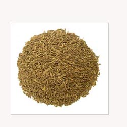Caraway Seeds - Loose Tea