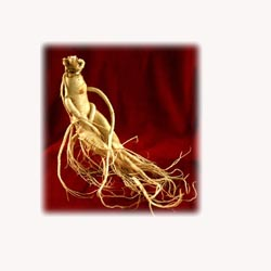 ( Panax ) Ginseng - 50 Capsules