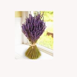 Lavender - 50 Capsules