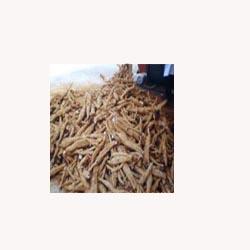 Kudzu Root - 50 Capsules
