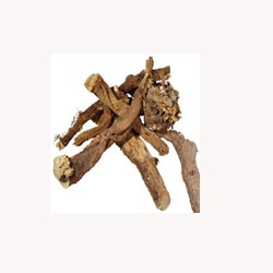 Licorice Root - 50 Capsules
