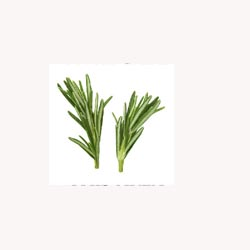Rosemary Leaves - Loose Tea
