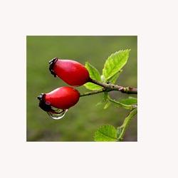 Rosehips - Loose Tea