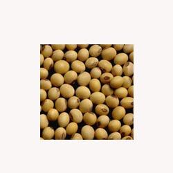 Lecithin - 50 Capsules
