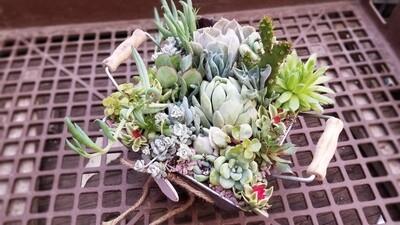 Custom Succulent Planters