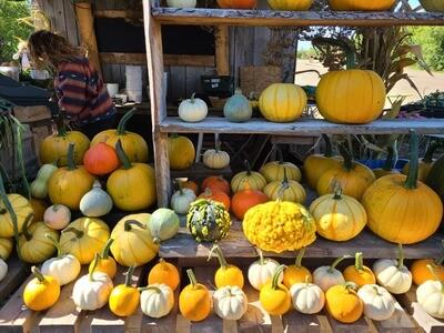 Pre-Order Pumpkins