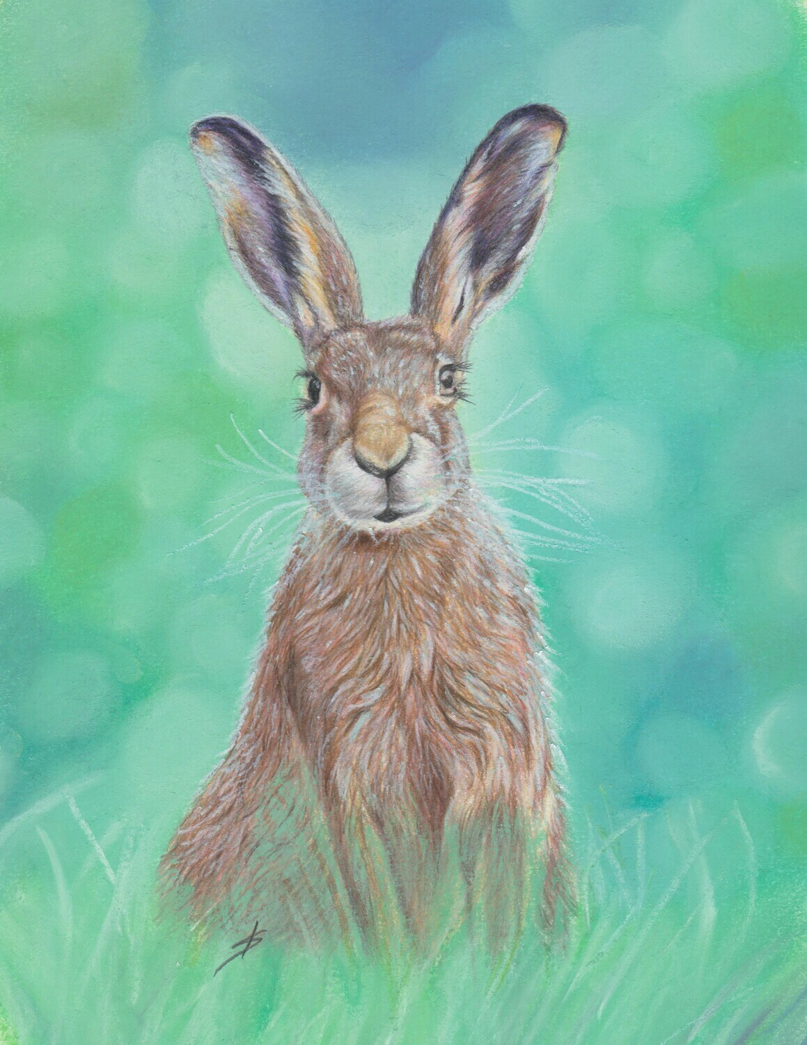Mr Hare Original
