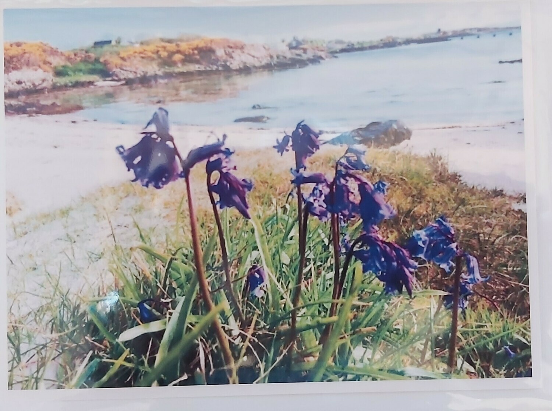 Bluebell Flowers at Rudha' chinn Mhoir, Isle of Gigha