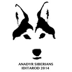 Alaskan's Anadyr Siberians
