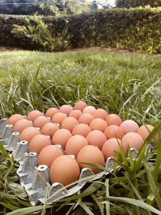 Huevos semi-orgánicos 30 unidades