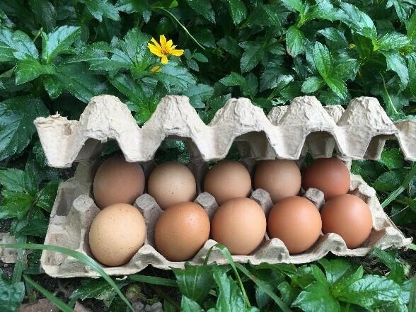 Huevos semi-orgánicos 10 unidades