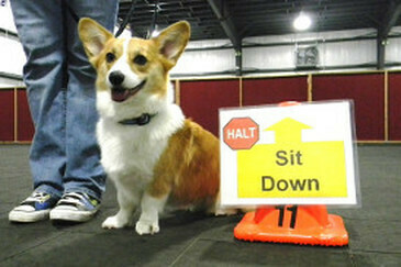 Rally Obedience - Intermediate
