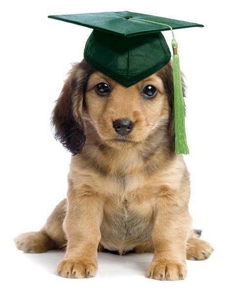 Puppy Start Right Class