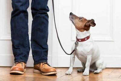 Canine Social Skills - Level 1 Saturday Class