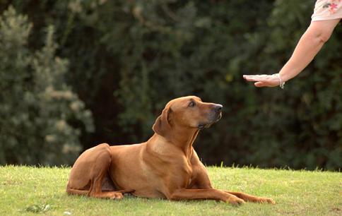 Canine Social Skills Level 2 Class
