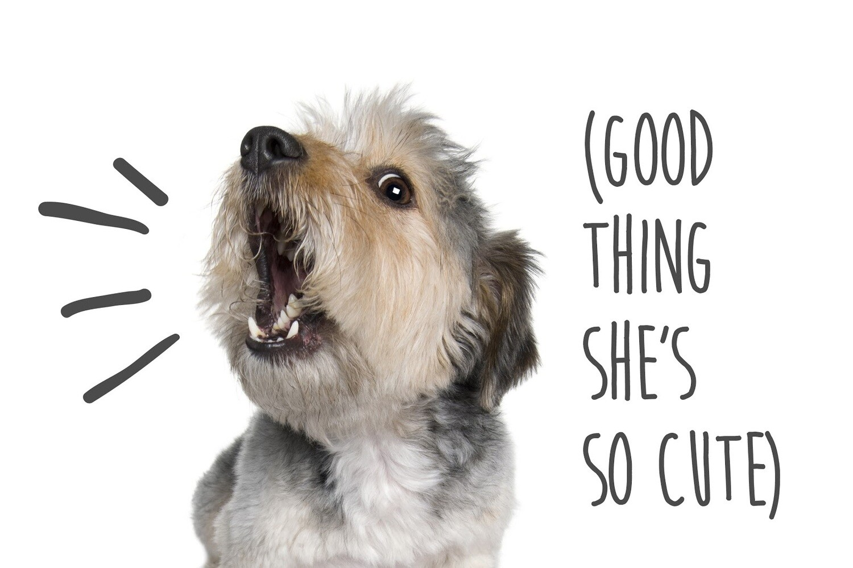 Reactive Dog Class