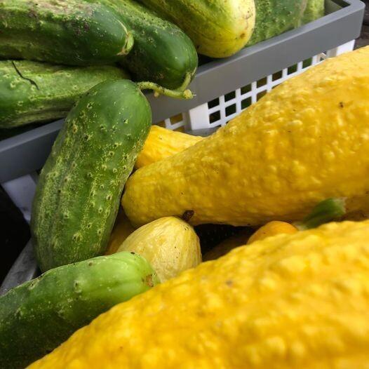 Seasonal Produce: Cucumbers + Squash