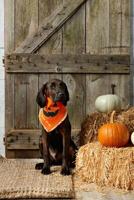 Pumpkin Dog Bandana #40220049P