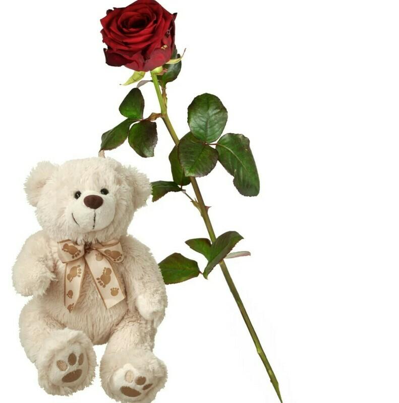 Rose & Teddy (weiss)