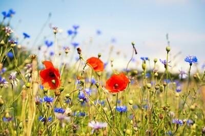 Essence Transmission - Flower Energy